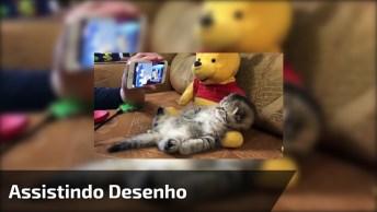 Filhote De Gato Assistindo Desenho No Celular Deitado Em Seu Urso De Pelúcia!