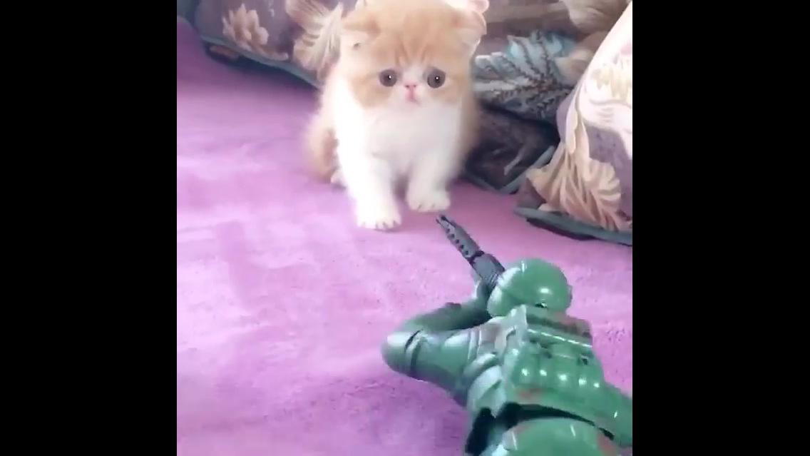Filhote de gato com medo de soldadinho de brinquedo