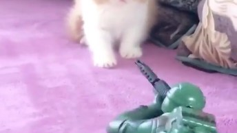 Filhote De Gato Com Medo De Soldadinho De Brinquedo, Olha Só Que Fofura!