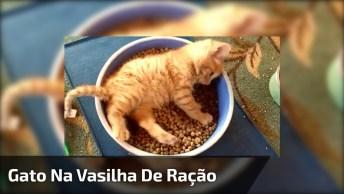 Filhote De Gato Deitado Dentro De Vasilha De Comida, É Muita Fofura!