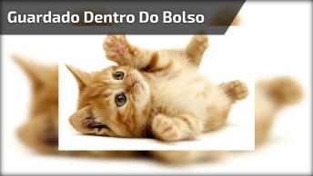 Filhote De Gato Dentro Do Bolço De Seu Dono, Olha Só Que Fofura!