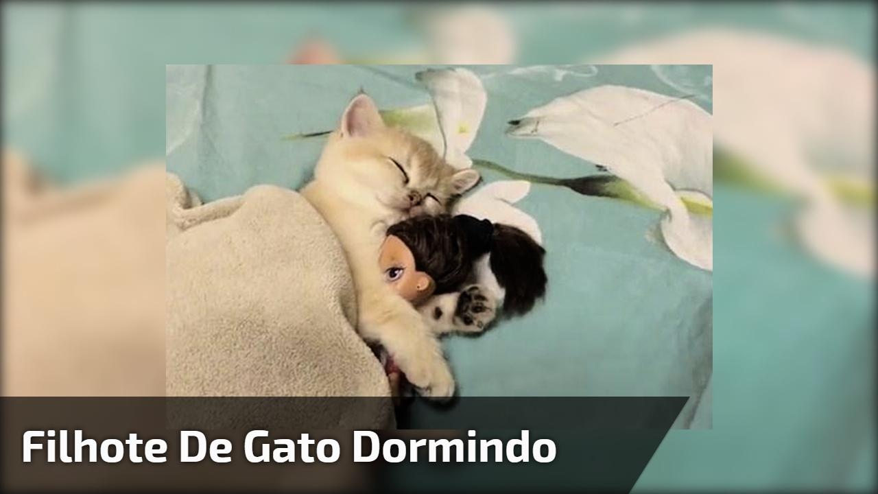 Filhote de gato dormindo abraçado com uma boneca, olha só que fofo!!!