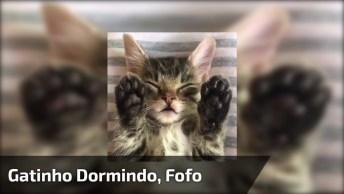 Filhote De Gato Dormindo De Barriguinha Para Cima, Veja Estas Patinhas!