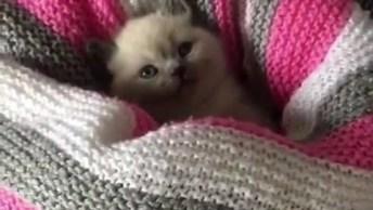 Filhote De Gato Escondendo Do Frio, Uma Fofura Para Compartilhar!