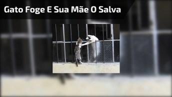 Filhote De Gato Foge, Mas Sua Mãe Aparece Para Salvar Seu Filho!