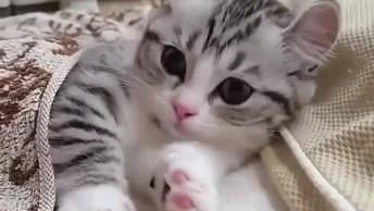Filhote De Gato Mais Lindo Do Dia, Para Desejar Uma Boa Noite Aos Amigos!