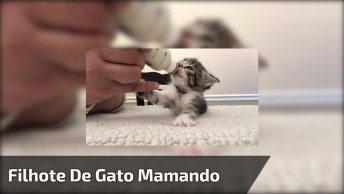 Filhote De Gato Mamando Da Mamadeira, Que Coisa Mais Fofinha!
