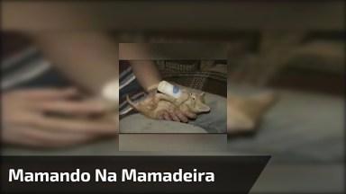 Filhote De Gato Mamando Na Mamadeira, Que Desespero Hein!