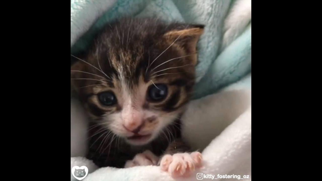 Filhote de gato, olha só este miadinho mais fofinho