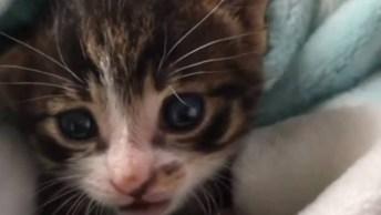 Filhote De Gato, Olha Só Este Miadinho Mais Fofinho, Impossível Não Se Apaixonar