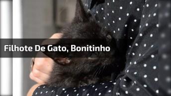 Filhote De Gato, Olha Só O Tamaninho Desta Criaturinha, É Muito Bonitinho!