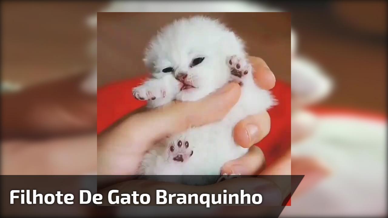 Filhote de gato branquinho
