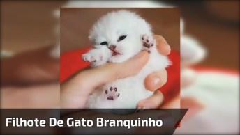 Filhote De Gato, Olha Só Que Coisinha Mais Lindinha, Impossível Não Se Apaixonar