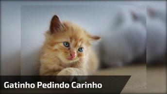 Filhote De Gato Pedindo Carinho Para Seu Dono Com A Patinha, Que Fofura!