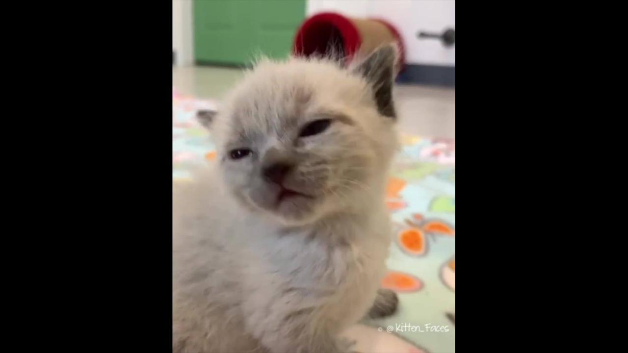 Filhote de gato soluçando