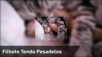 Filhote De Gato Tendo Pesadelos Enquanto Dorme, Veja A Reação Da Mamãe!