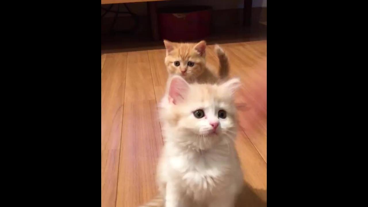 Filhote de gatos brincando