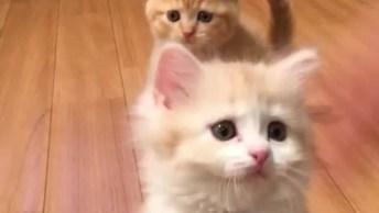 Filhote De Gatos Brincando, Como Eles São Engraçadinhos E Fofos!