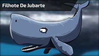 Filhote De Jubarte, Uma Baleira Que Já Esteve Próximo A Extinção!