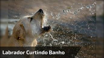 Filhote De Labrador Curtindo Banho No Tanque, Olha Só A Folga!