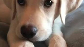 Filhote De Cachorro Fofo Querendo Brincar!