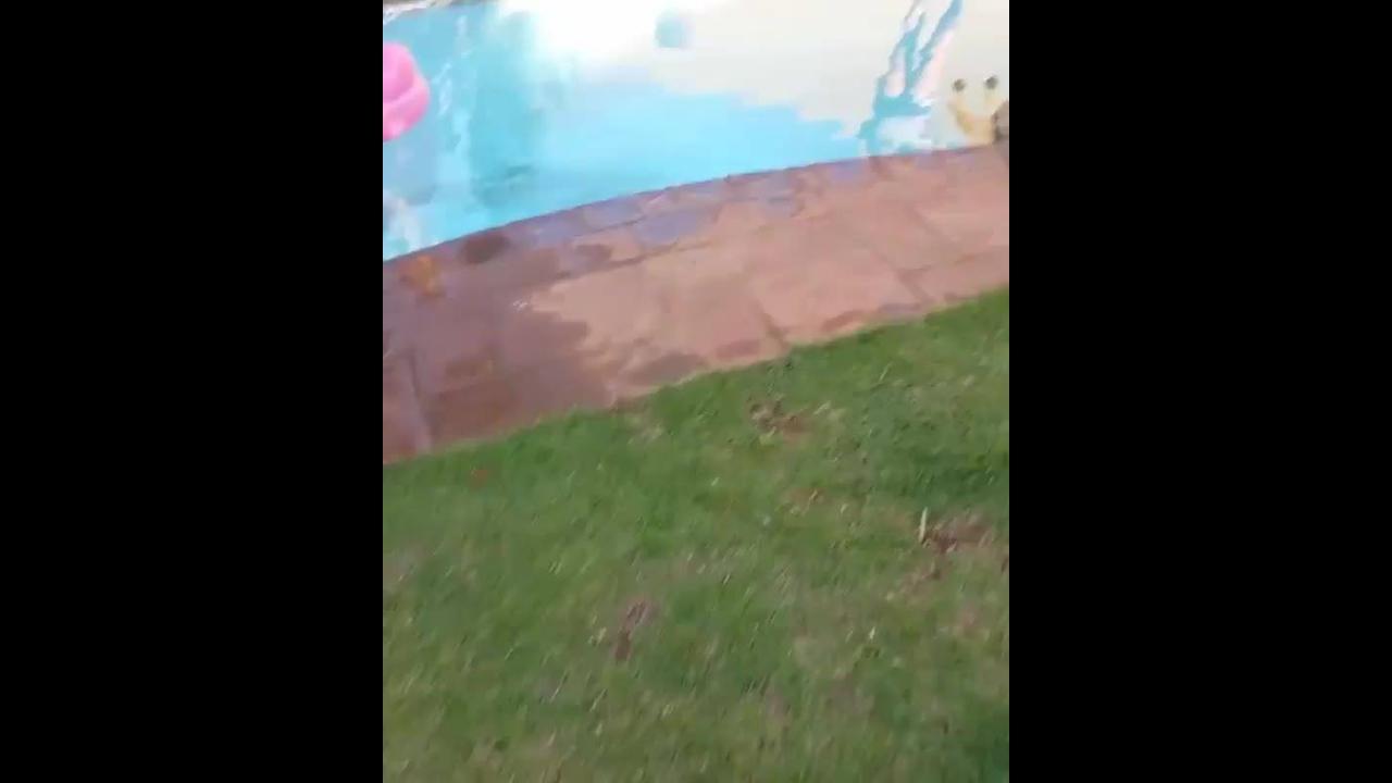 Filhote de pastor alemão curtindo piscina deitado na perna de seu dono