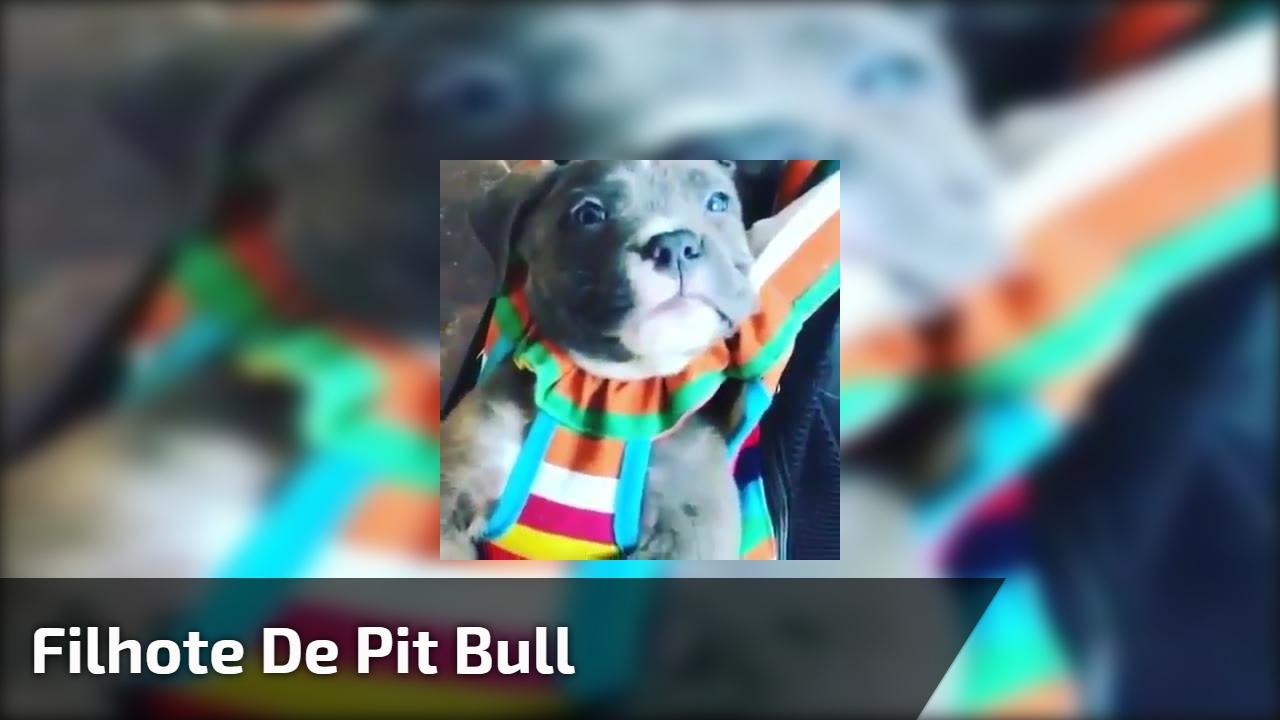 Filhote de Pit Bull