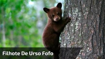 Filhote De Urso Ataca Homem Em Parque, Confira As Cenas No Vídeo!