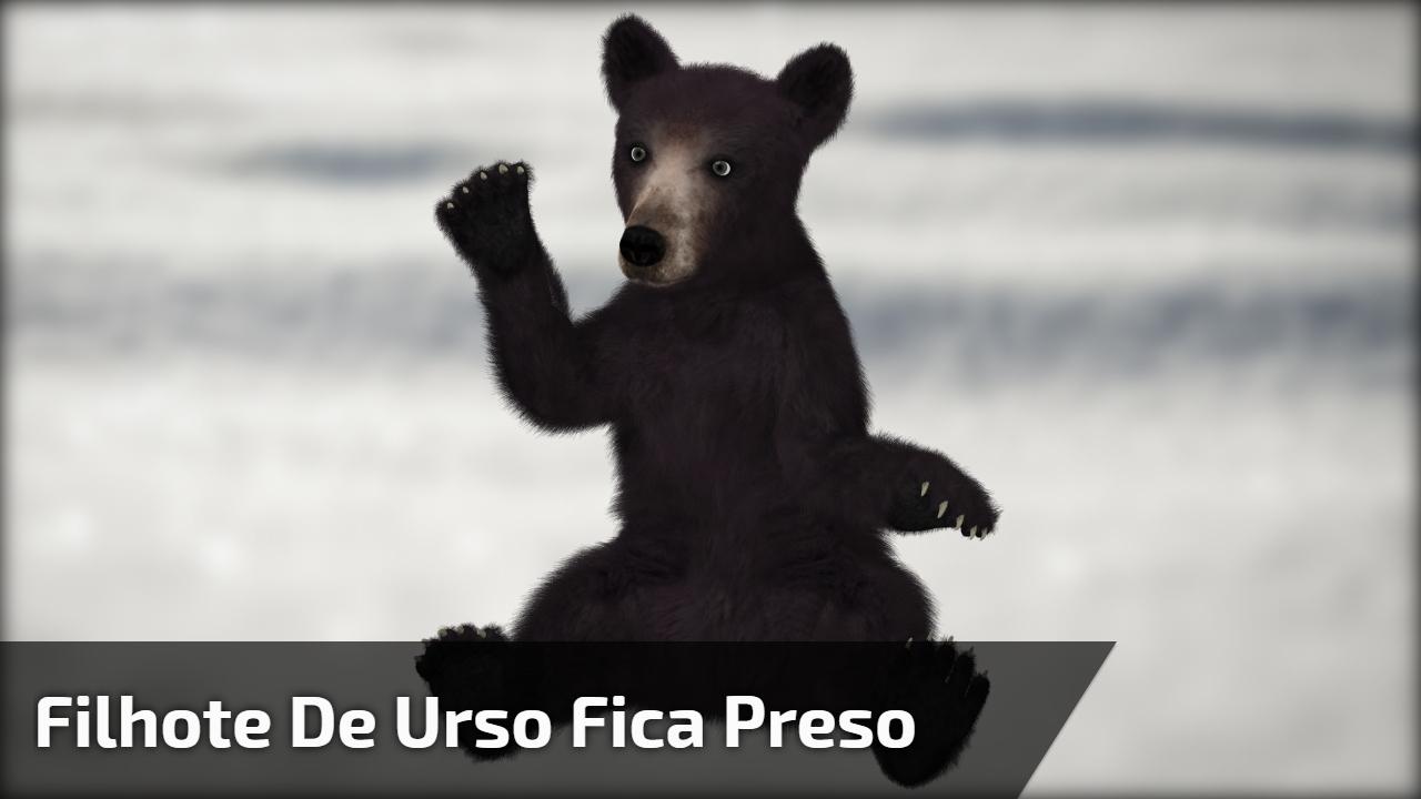 Filhote de urso fica preso