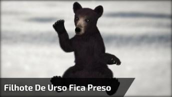 Filhote De Urso Fica Preso Na Neve, Mas Aparece Um Anjo Para Salvá-Lo!