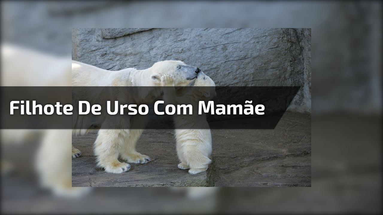 Filhote de urso com mamãe