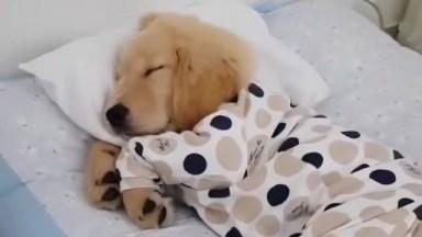 Filhote Tirando Uma Soneca Ena Caminha, De Pijama E Tudo, Que Fofura!