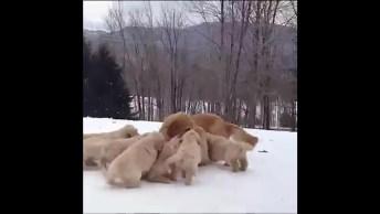 Filhotes Brincando Com A Mamãe Na Neve, Olha Só Que Fofura De Vídeo!