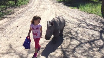 Filhotes Das Mais Diferentes Espécies De Animais, Que Lindos!