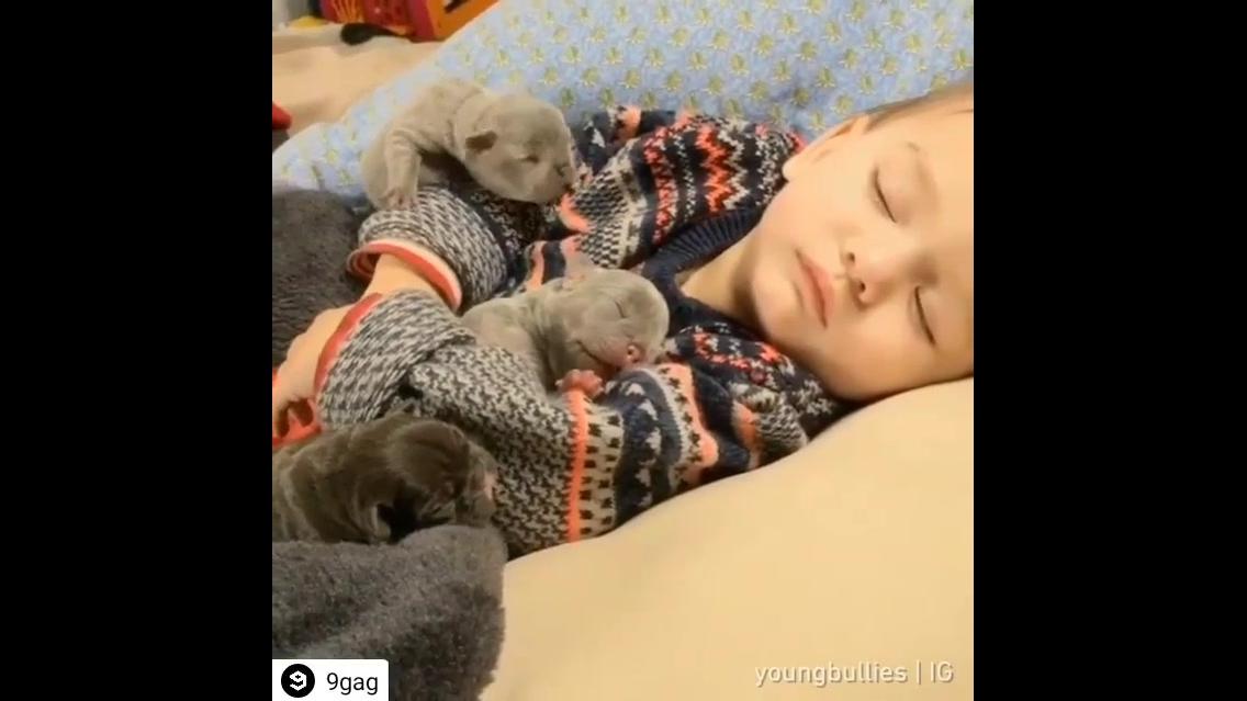 Filhotes de Bulldog com criança