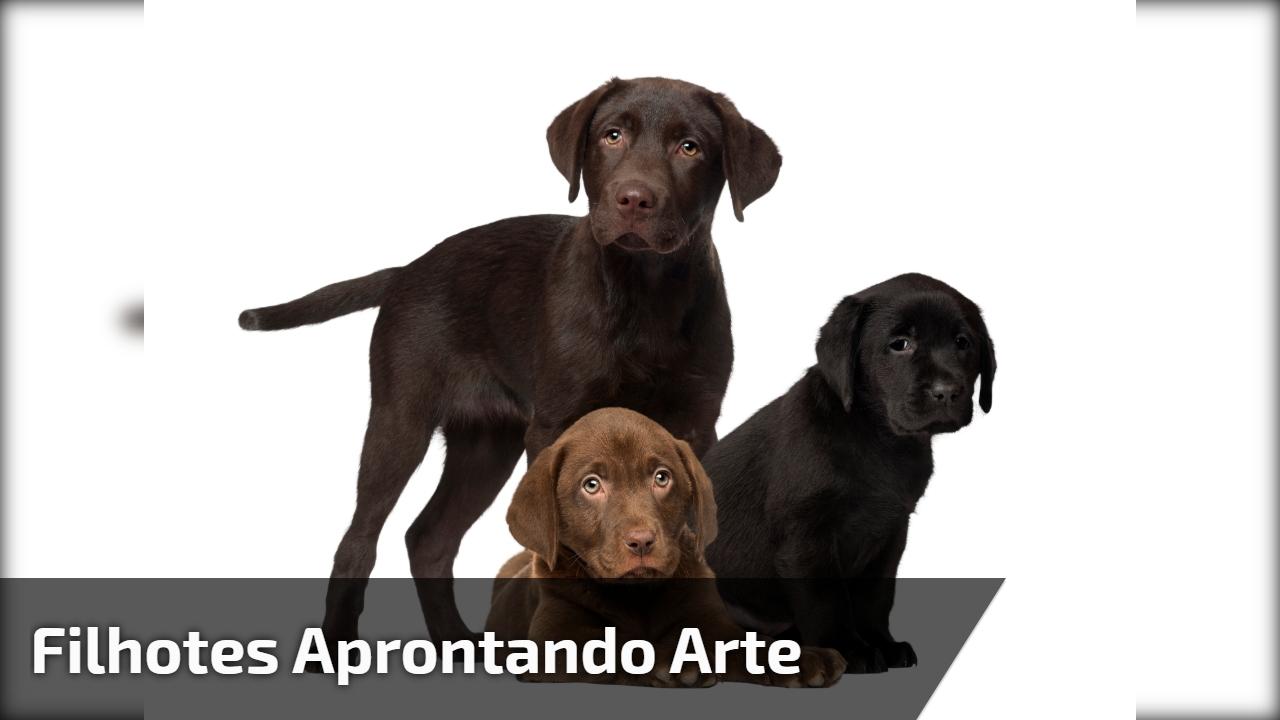 Filhotes de cachorro aprontando arte com uma mangueira, confira!