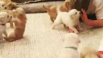 Filhotes De Cachorros Brincando, Olha Só Que Coisinhas Mais Fofas!