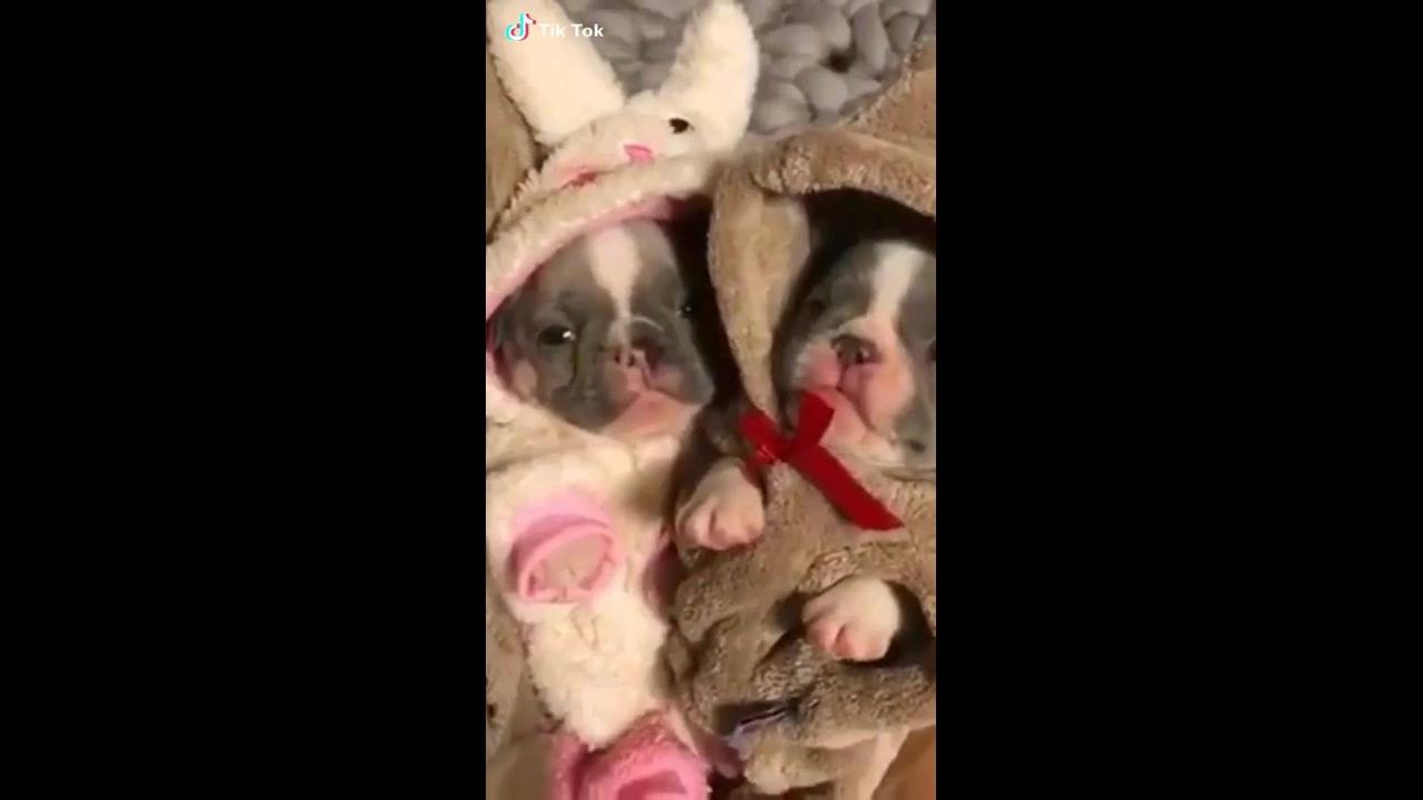 Filhotes de cachorros com macacãozinho de inverno
