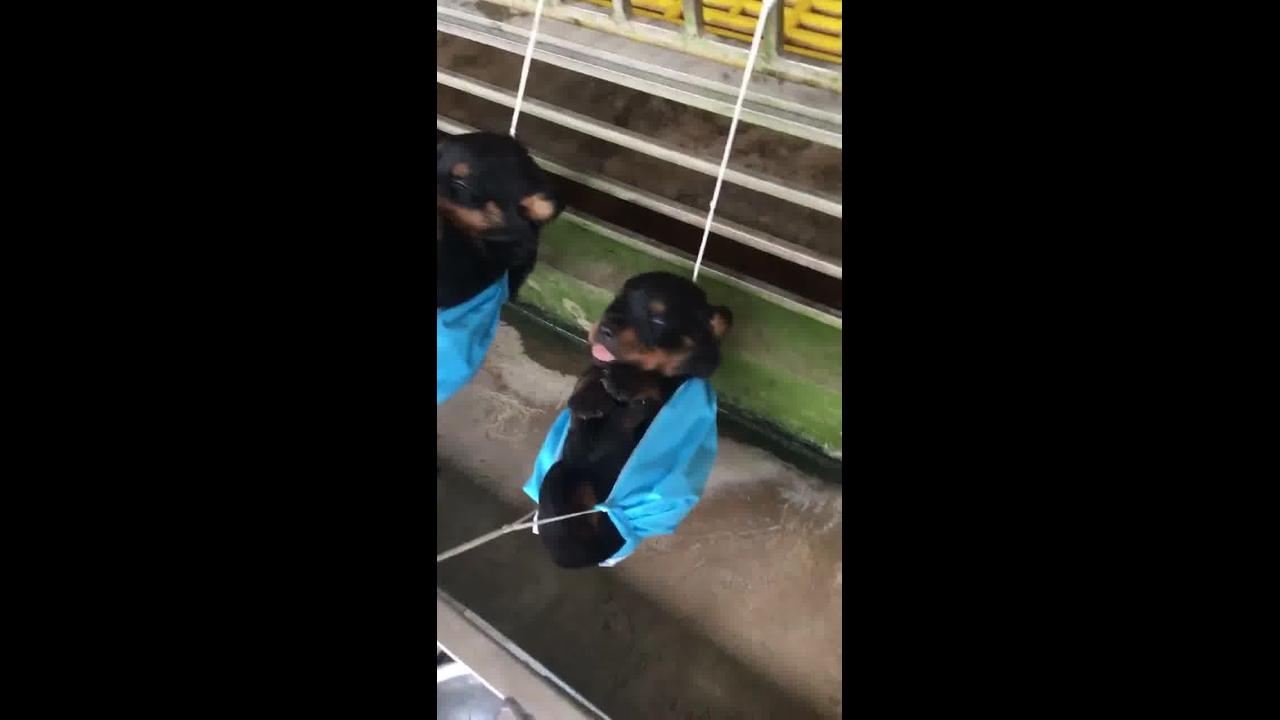 Filhotes de cachorros descansando em redes