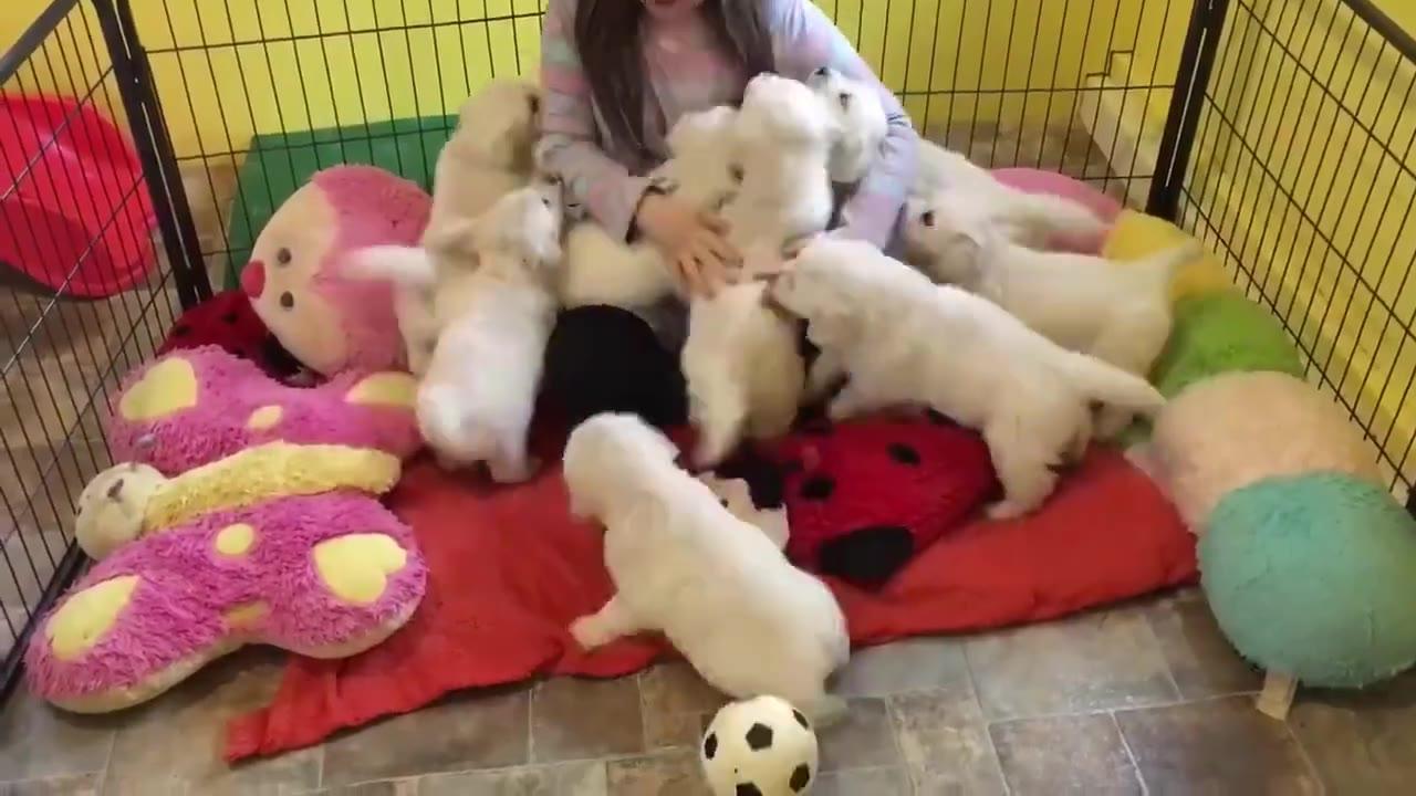 Filhotes de cachorros e uma menina