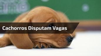 Filhotes De Cachorros Preferem Ficar Em Cama Minúscula E Abandonam Cama Enorme!