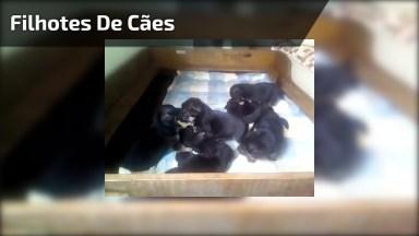 Filhotes De Cães Fazendo Bagunça, Eles Fazem Uma Folia Super Divertida!