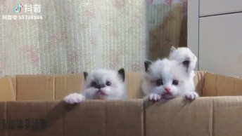 Filhotes De Gatinho Dentro De Uma Caixa, Olha Só A Carinha Deles!