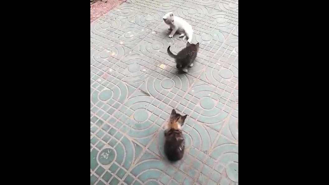 Filhotes de gatinhos brincando estre si