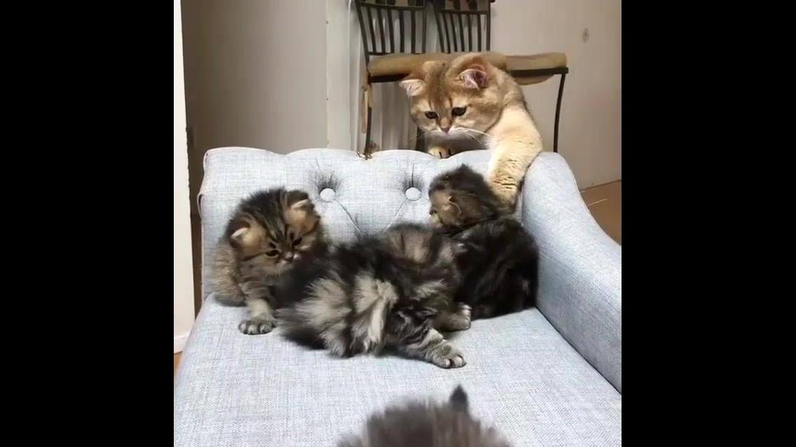 Filhotes de gatinhos curtindo preguiça, olha só as carinhas destas criaturinhas!