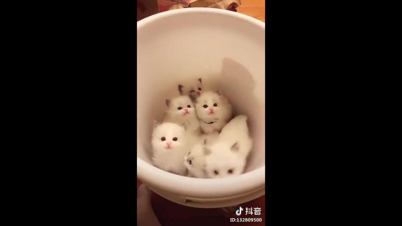 Filhotes de gatinhos dentro de uma bacia