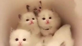 Filhotes De Gatinhos Dentro De Uma Bacia, Olha Só Que Lindinhos Estes Narizinhos