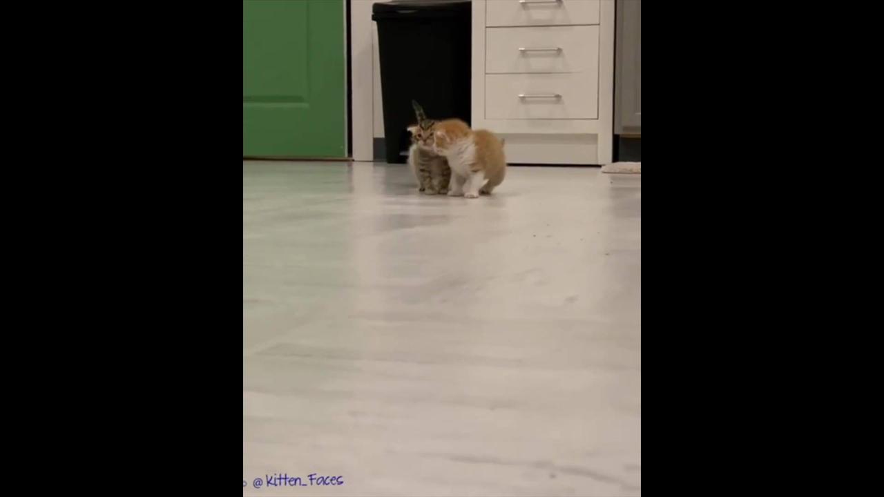 Filhotes de gatinhos explorando a casa