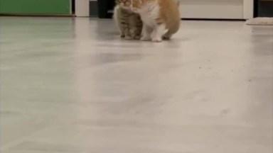 Filhotes De Gatinhos Explorando A Casa, Olha Só Que Fofuras!