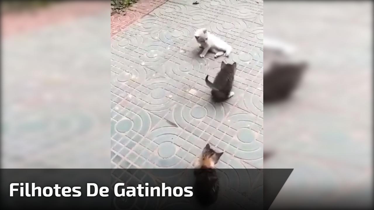 Filhotes de gatinhos, olha só que criaturinhas mais fofas!!!